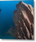 Barrel Sponge And Diver, Papua New Metal Print by Steve Jones
