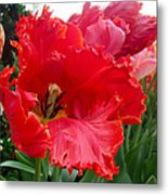 Beautiful From Inside And Out - Parrot Tulips In Philadelphia Metal Print by Mother Nature