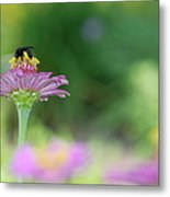 Bee Marks The Spot Metal Print by Kathy Gibbons