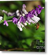 Bee On Flower Metal Print by Kaye Menner