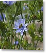 Bee On Romaine Flower Metal Print by Donna Munro