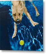 Belly Flop Metal Print by Jill Reger