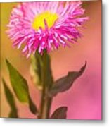 Little Flower Metal Print by Angela Doelling AD DESIGN Photo and PhotoArt