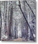 Big Sur State Park Metal Print by Jane Linders
