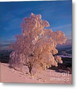 Birch Metal Print by Elena Filatova