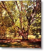 Birch Tree Metal Print by Jai Johnson