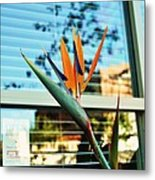 Bird Of Paradise-2 Metal Print by Todd Sherlock