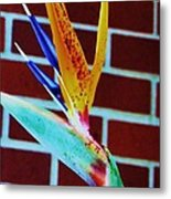 Bird Of Paradise Metal Print by Todd Sherlock