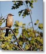 Bird On Branch Metal Print by Chase Hall