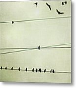 Birds On Telephone Wire Metal Print by Lucy Loomis, Photographer