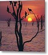 Birds On Tree, Lake Kariba At Sunset Metal Print by Axiom Photographic