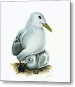 Black-legged Kittiwake Parent And Chick Metal Print by Logan Parsons