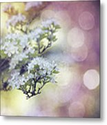 Blossom Metal Print by Joel Olives