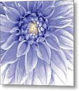 Blue Dahlia Metal Print by Al Hurley