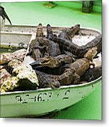 Boat Full Of Alligators  Metal Print by Garry Gay