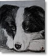 Borden Collie Pup Metal Print by Joan Pye