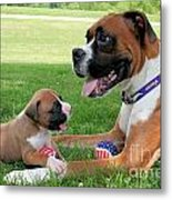 Boxer Mommy And Pup Metal Print by Renae Laughner