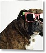 Boxer Wearing Sunglasses Metal Print by Ron Nickel