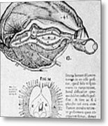 Brain And Pineal Gland Metal Print by Science Source