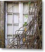 Branchy Window Metal Print by Carlos Caetano