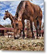 Break Time Metal Print by Kelley King
