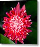 Bromeliad Bloom Metal Print by Rich Franco
