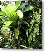 Bromeliad On Tree Trunk El Yunque National Forest Metal Print by Thomas R Fletcher