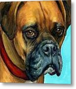 Brown Boxer On Turquoise Metal Print by Dottie Dracos