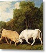 Bulls Fighting Metal Print by George Stubbs