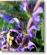 Bumble Bee On Flower Metal Print by Renee Trenholm
