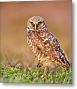 Burrowing Owl Metal Print by TNWA Photography