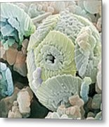Calcareous Phytoplankton Fossil, Sem Metal Print by Power And Syred