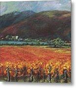 Calistoga Vineyard In Napa Valley By Deirdre Shibano Metal Print by Deirdre Shibano