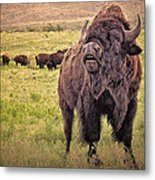 Call Of The Bison Metal Print by Tamyra Ayles