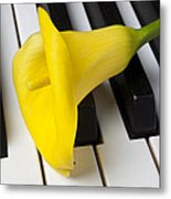 Calla Lily On Keyboard Metal Print by Garry Gay