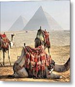 Camel And Pyramids, Caro, Egypt. Metal Print by Oudi
