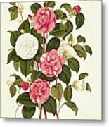 Camellia Metal Print by English School