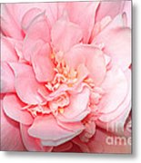 Camellia Metal Print by Louise Heusinkveld