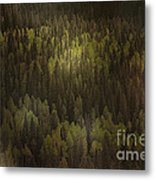 Canadian Forest - The Woods Are Lovely Dark And Deep Metal Print by Christine Till