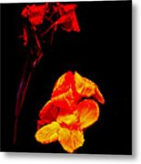 Canna Lilies On Black Metal Print by Mother Nature