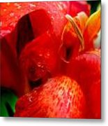 Canna Lily Metal Print by Tammy McKinley