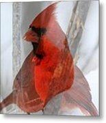 Cardinal Collage Metal Print by Rick Rauzi