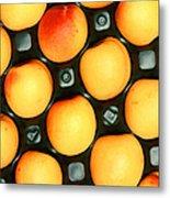 Castlebrite Apricot Metal Print by Photo Researchers