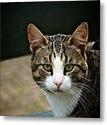 Cat Metal Print by Odd Jeppesen
