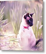 Cat Sitting By Daffodils Metal Print by Sasha Bell