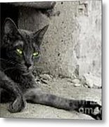 cat Metal Print by Zuzanna Nasidlak