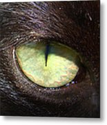 Cat's Eye Metal Print by Shannon Blanchard