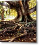 Centenarian Tree Metal Print by Carlos Caetano