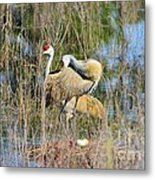 Changing Of The Guards 2 Metal Print by Lynda Dawson-Youngclaus