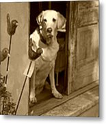 Charleston Shop Dog In Sepia Metal Print by Suzanne Gaff
